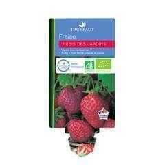 Plants de fraisiers 'Rubis des Jardins' bio : barquette 4 plants