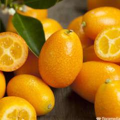 Kumquat : C3L, Agriculture Biologique, greffe