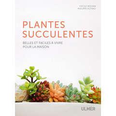 Plantes succulentes faciles à vivre