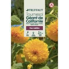 Tournesol géant de californie 4 g