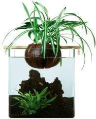 Kit de filtration naturelle CocoGarden aquaponie pour petit aquarium