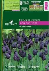 Bulbes de tulipes 'Queen of Night' - x25
