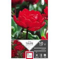 Bulbes de tulipes doubles hâtives 'Largo' - x10