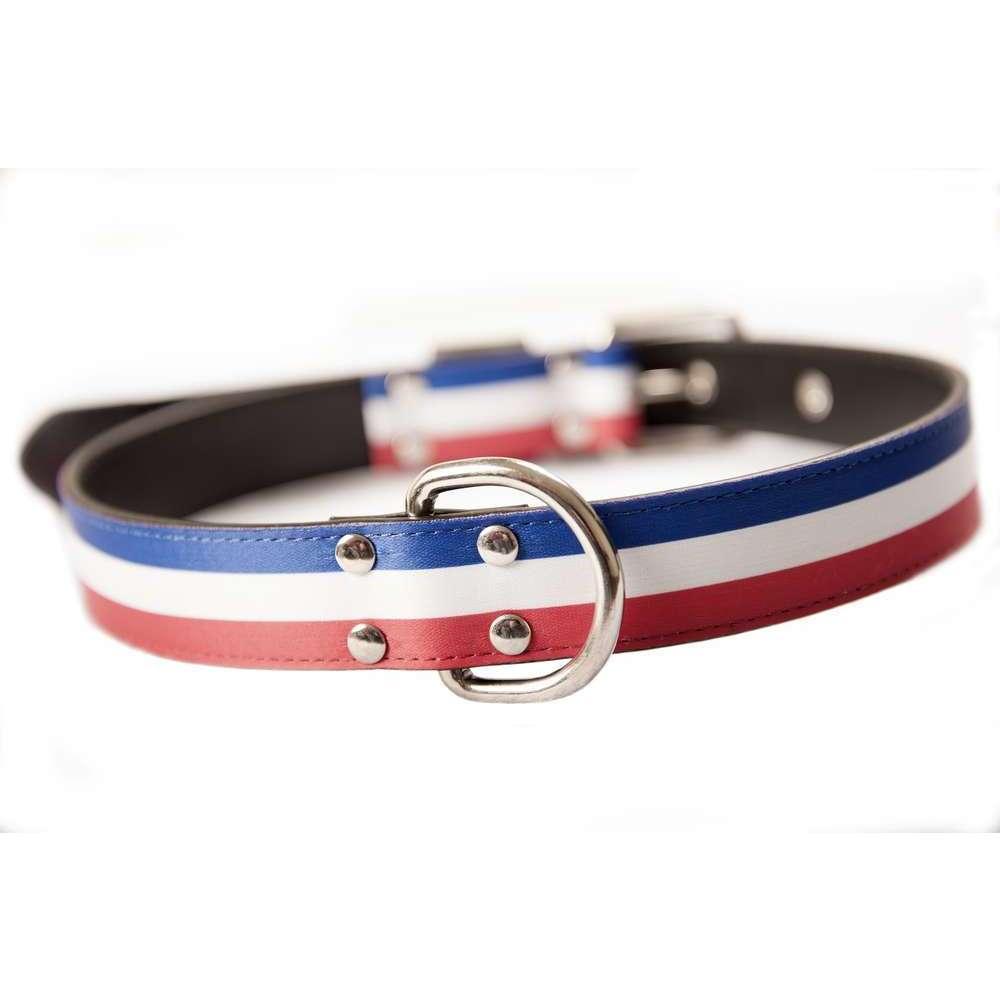 le collier pour chien