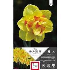 Bulbes de narcisses doubles 'Tahiti' - x9