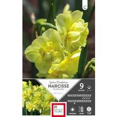 Bulbes de narcisses pluriflores 'Yellow Cheerfulness' - x9