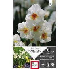 Bulbes de narcisses pluriflores 'Bridal Crown' - x9