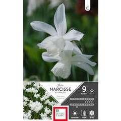 Bulbes de narcisses triandrus 'Thalia' - x9