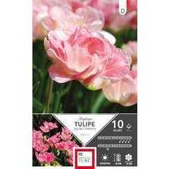 Bulbes de tulipes doubles tardives 'Angélique' - x10