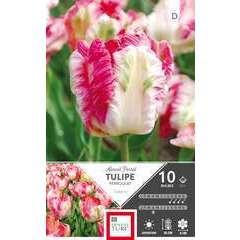 Bulbes de tulipes perroquets 'Apricot Parrot' - x10
