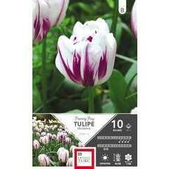 Bulbes de tulipes triomphe 'Flaming Flag' - x10