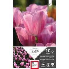 Bulbes de tulipes triomphe 'Mistress' - x10