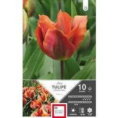 Bulbes de tulipes viridiflora 'Artist' - x10