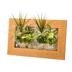 Cadre Wallflower 58x37 vieux bois