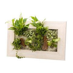 Cadre Wallflower 58x37 vieux bois blanchi