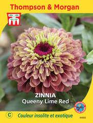 Zinnia Queeny Lime Red graines en sachet