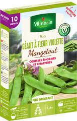 Graines de pois Mangetout Géant à Fleur Violette en boite