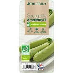 Plant de courgette 'Amalthée' F1 bio : pot de 0,5 litre