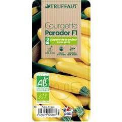 Plant de courgette 'Parador' F1 bio : pot de 0,5 litre