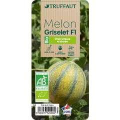 Plant de melon 'Griselet' F1 bio : pot de 0,5 litre