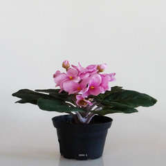 Saint Paulia artificiel en pot H 16 cm Tres fleuri Rose