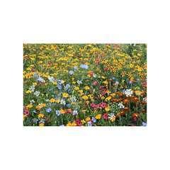 Mélange écologique de graines de fleurs Anti-Doryphores