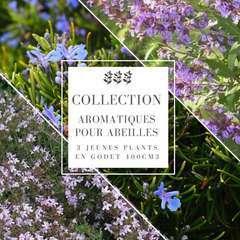 Collection 3 Plantes Aromatiques : godets