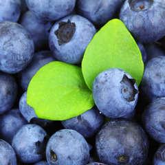 Myrtillier arbustif 'bleuet'