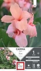 Canna Nain Gnom I X1