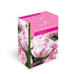Bulbes de tulipes à fleur double 'Finola' - x10