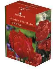 Bulbes de tulipes à fleur double 'Viking' - x10