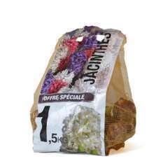 Bulbe de jacinthe - sac de 1,5 kg