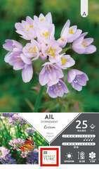 Bulbes d'allium court roseum - x25