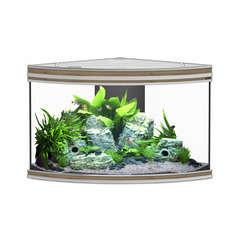 Aquarium fusion corner zebrano