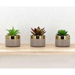 Lot de 3 succulentes artificielles pot terrazzo + liseret doré H10 cm