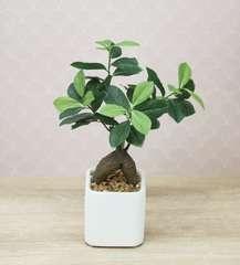 Bonsaï Ficus ginseng artificiel pot céramique carré blanc mat 28 cm