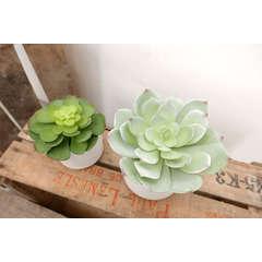 Succulente Echeveria/chou artificielle pot céramique blanc D14xH17cm