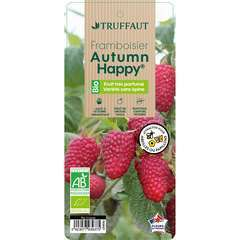 Framboisier Autumn Happy® 'Malling Happy' : pot de 3 litres