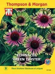 Echinacée Green Twister