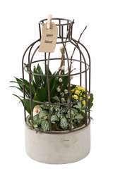 Composition plantes intérieur, cage béton D18xH38cm
