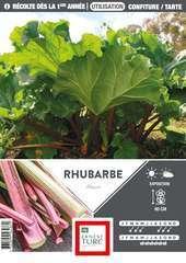 Souche de Rhubarbe  x1