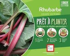 Rhubarbe bourriche