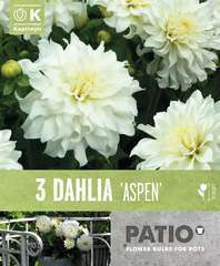 Dahlias semi cactus  noir-blanc x3