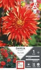 Dahlia Deco Feu Follet Fdf Ix1
