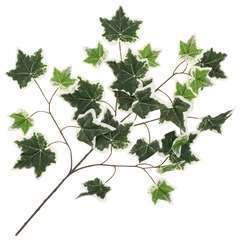 10 pcs Feuilles artificielles de lierre Vert et blanc 70 cm