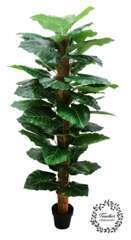 Plante philodendron alocasia artificielle 180cm tronc coco