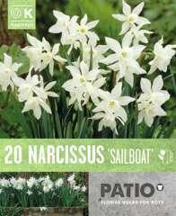 Bulbes de narcisses 'Sailboat' - x20
