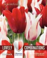 Bulbes de tulipes doubles rouge et blanc - x15
