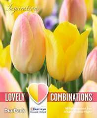 Bulbes de tulipes triples - x15