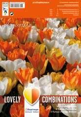 Bulbes de tulipes blanc, jaune et orange - x20